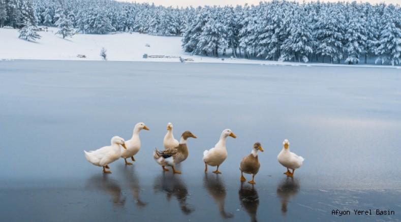 Akdağ Göleti buz tuttu, ördekler göl üzerinde kameralara poz verdi